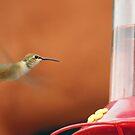 humming bird by Mark scott