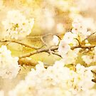 Song of Spring Lovely White Cherry Blossoms  by Beverly Claire Kaiya