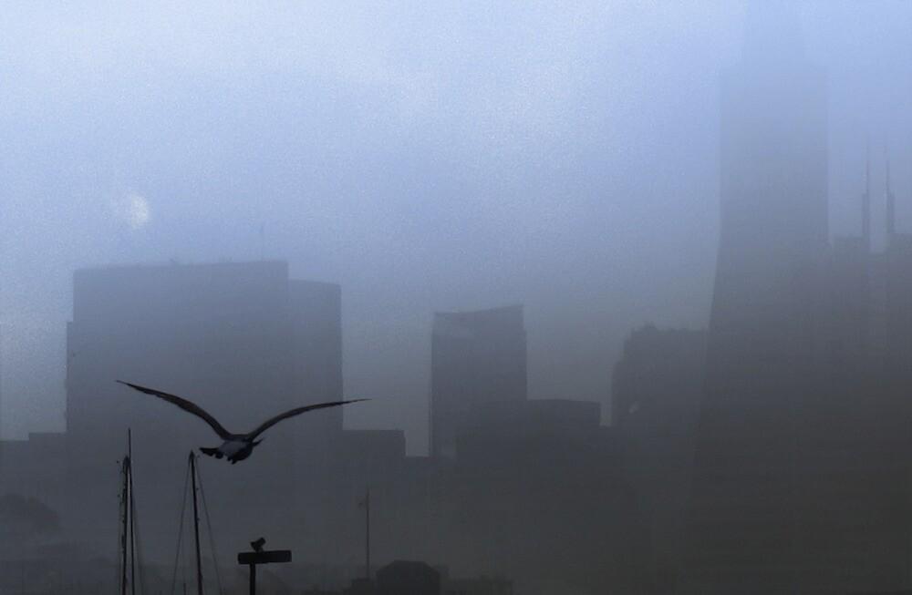 Gull Through the Mist by David Denny