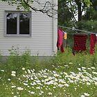 Late summer. Backyard. by UpNorthPhoto