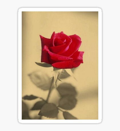 Red Rose Flower Isolated on Sepia Background Sticker