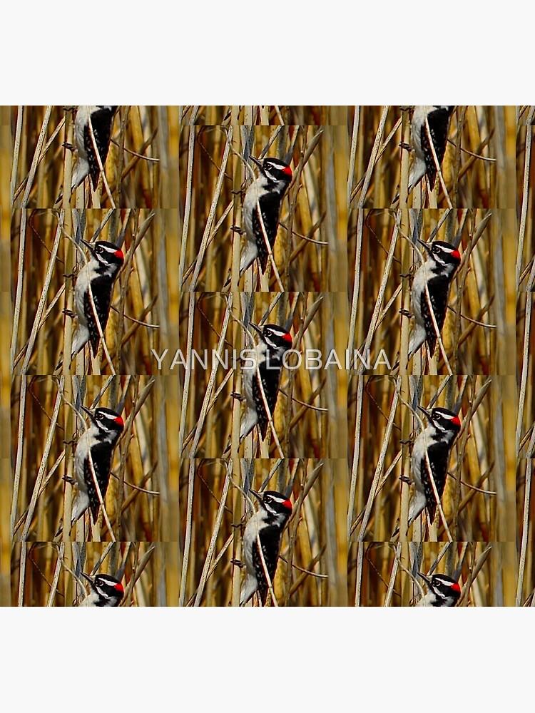Red-headed woodpecker by Yannis Lobaina  by lobaina1979