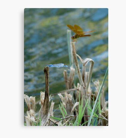Blue & Amber Canvas Print