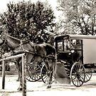 Horses 'n' Buggies by Dyle Warren