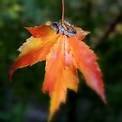 Autumn Promises by Grinch/R. Pross
