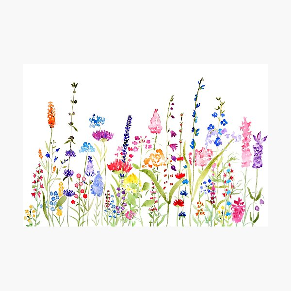 colorful wild flower field  Photographic Print