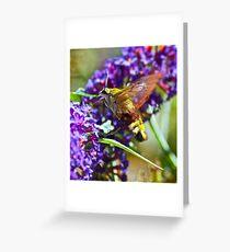 Bumble bee humming bird moth Greeting Card