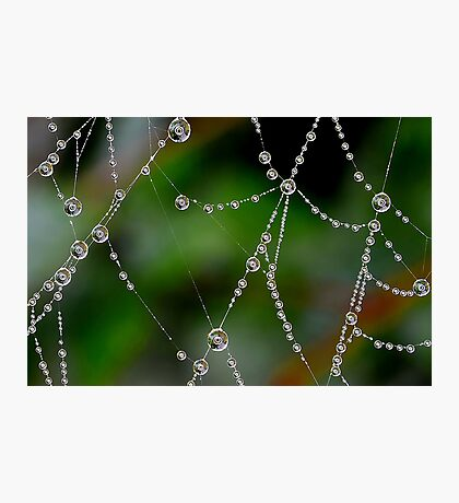 Close up of Dewdrops Using a Ring Light Photographic Print