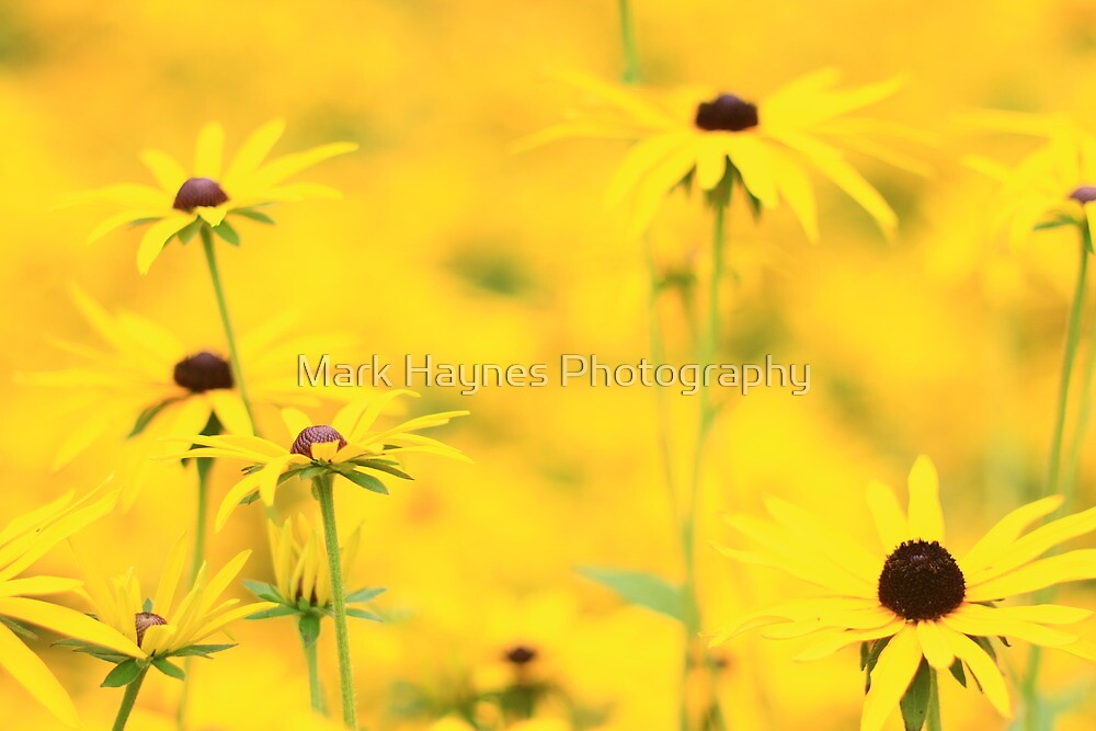 Brighter Yellow by Mark Haynes Photography