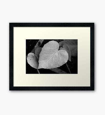 Ivy Heart Framed Print