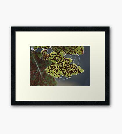 A Little Egg Lay On A Leaf... Framed Print