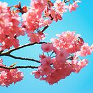 Beautiful Spring Pink Cherry Blossoms Blue Sky by Beverly Claire Kaiya