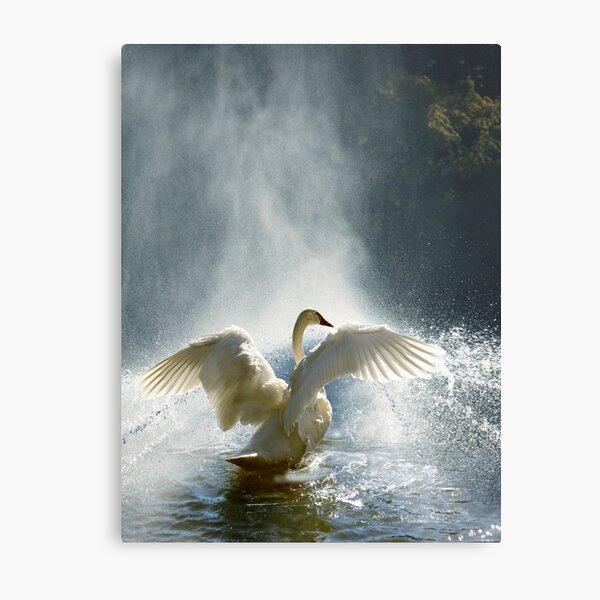 Water Mist Bathing Metal Print