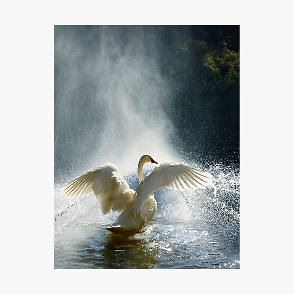 Water Mist Bathing Photographic Print