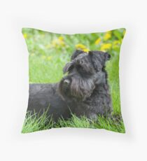 Black Miniature Schnauzer Dog Throw Pillow