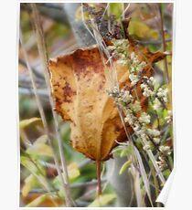 Fallen Leaf 3 Poster