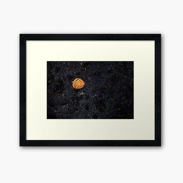 Fallen Fagus Leaf, Mt Field, Tasmania Framed Art Print