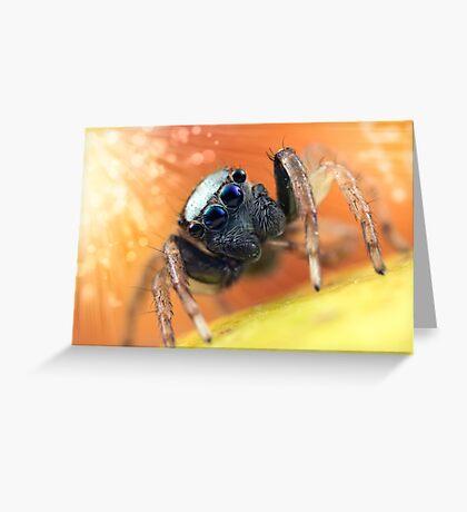 'Menemerus bivittatus' Greeting Card