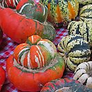 Turban Squash and Friends by Jack Ryan