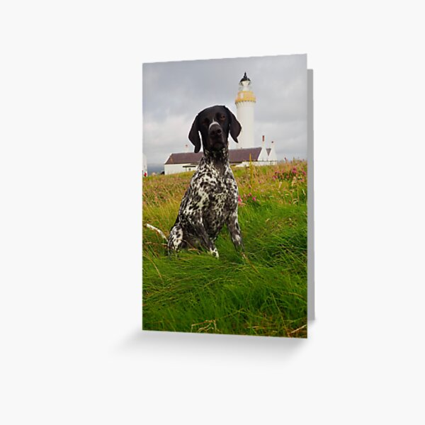 Ziggy the GSP at Cantick Head Lighthouse on the Orkney island of Hoy in Scotland  Greeting Card