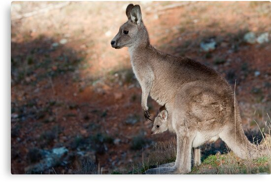 Kangaroo and joey by Steven Ralser