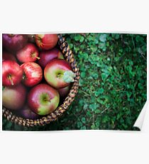Apple Basket Poster