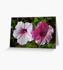 Two Tone Petunia Greeting Card
