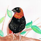 Red Bishop  / rooivink  by Elizabeth Kendall