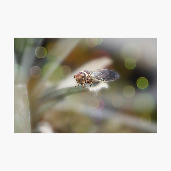 Cicada on Pineapple Tree in Summer Light Photographic Print