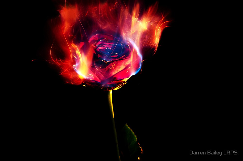 The Rose of Paracelsus by Darren Bailey LRPS