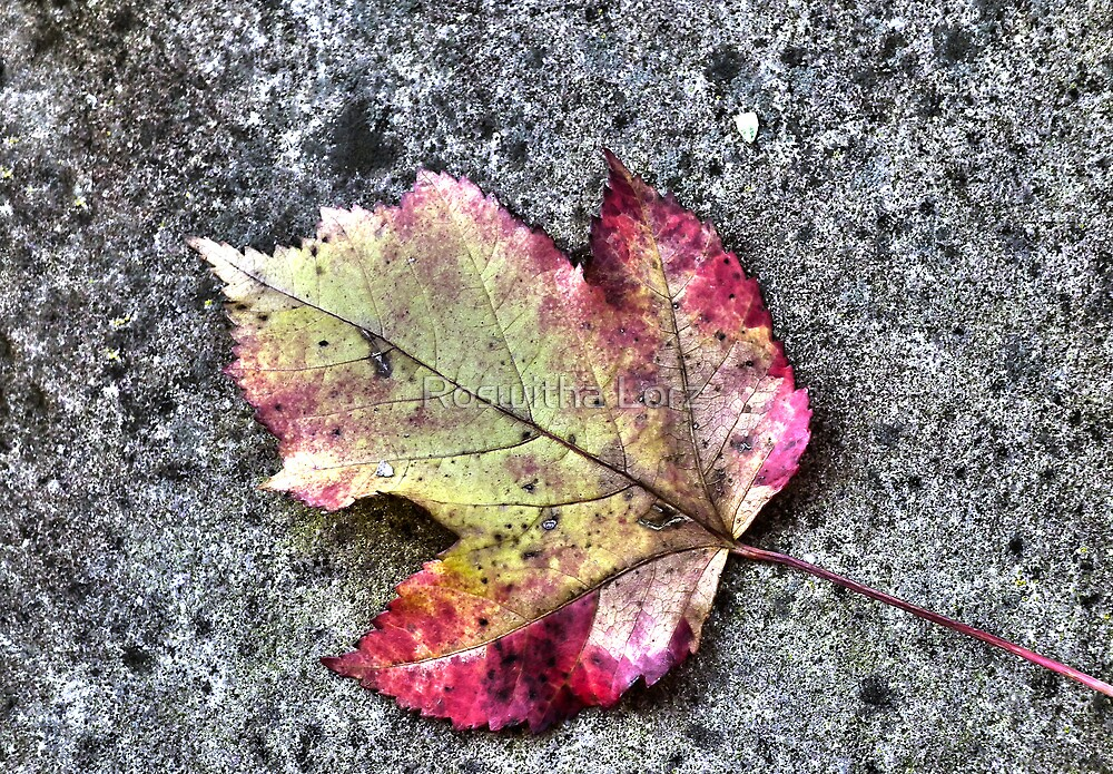 Autumn leaf by RosiLorz