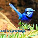 Spendid Blue Fairy Wren Christmas Card by Susan Moss