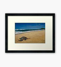 Green Sea Turtle, Oahu Framed Print