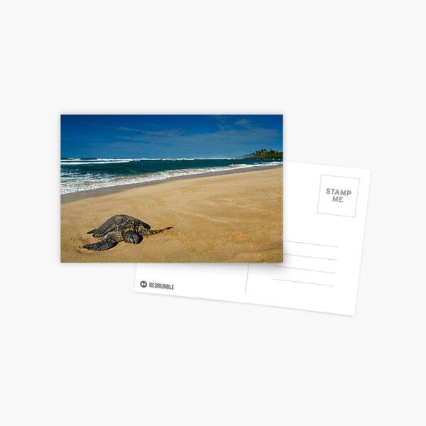Green Sea Turtle, Oahu Postcard