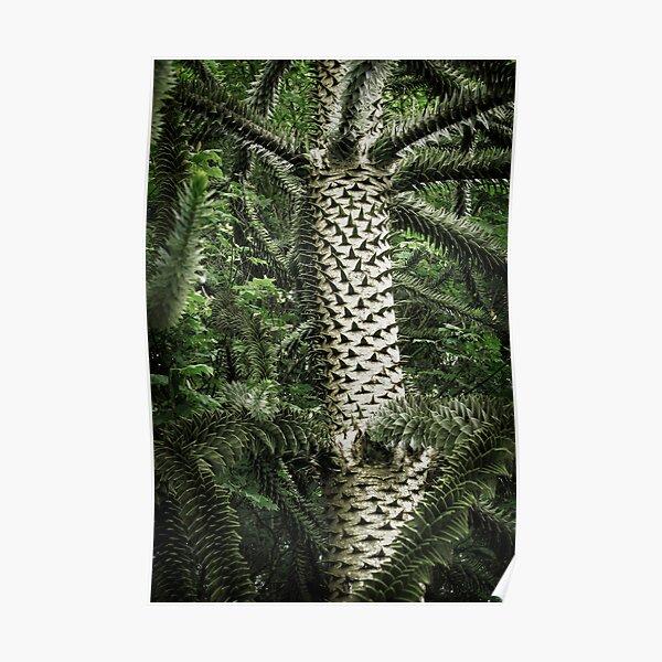 Monkey Puzzle Tree Poster