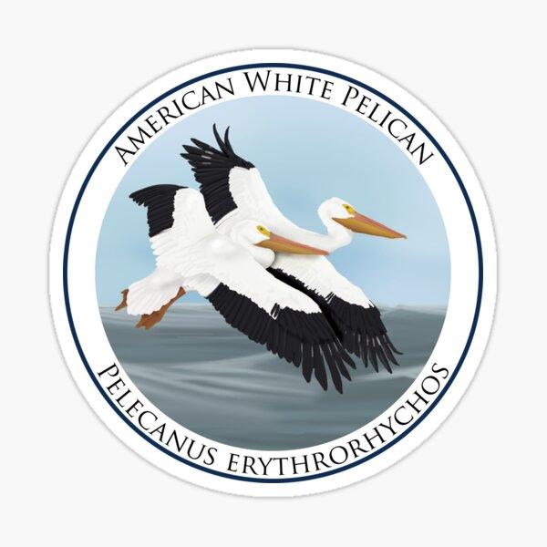 American White Pelican Badge Sticker