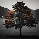 Selectively Autumn by Tim Waters