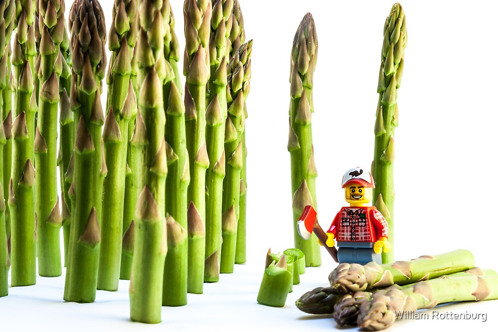 Asparagus Harvest by William Rottenburg
