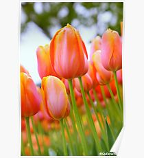 A Fun Day With the Tulips at the Floriade 2013 Poster