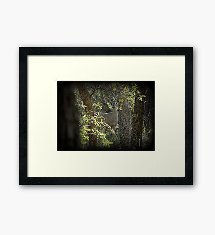 Coues White-tailed Deer (Doe) Sighting Framed Print