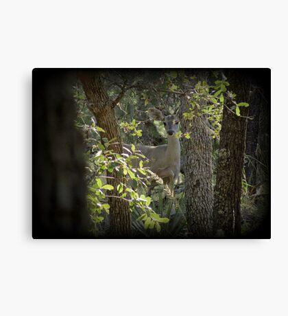 Coues White-tailed Deer (Doe) Sighting Canvas Print