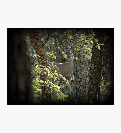 Coues White-tailed Deer (Doe) Sighting Photographic Print