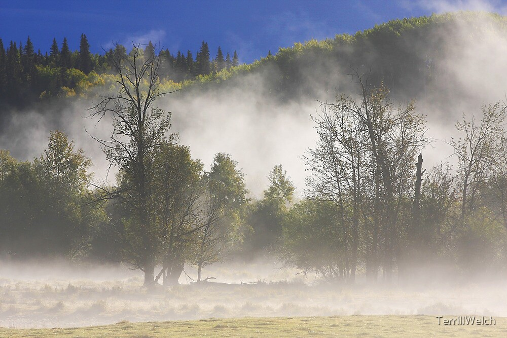 Early Autumn Morning In The Field  by TerrillWelch