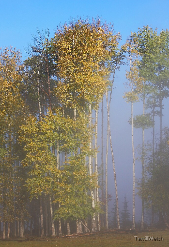 Tall Trees Early Autumn by TerrillWelch