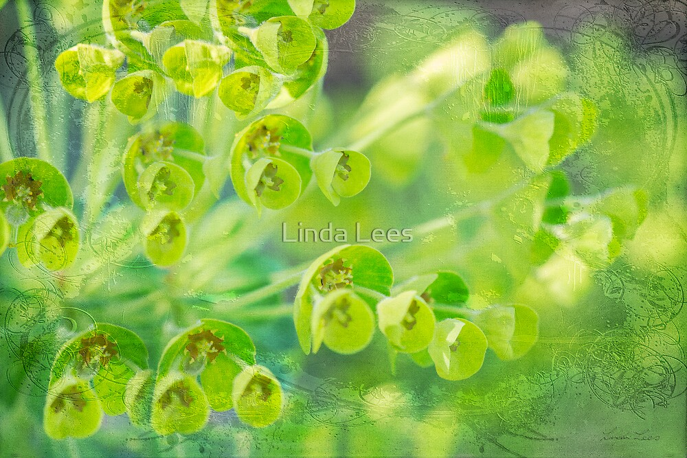 Green is the color of Spring by Linda Lees