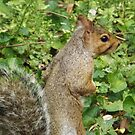 Squirrel Close-Up, Jersey City, New Jersey by lenspiro