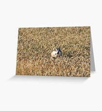 Ears of corn Greeting Card