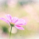 Lovely Pink Cosmos Flower Sunlight Vintage Paper by Beverly Claire Kaiya
