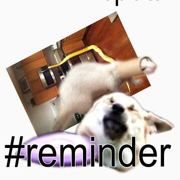 PBC #reminder collage by pbcmemeking69