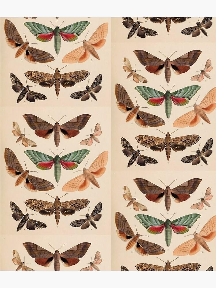 Naturalist Moths by bluespecsstudio